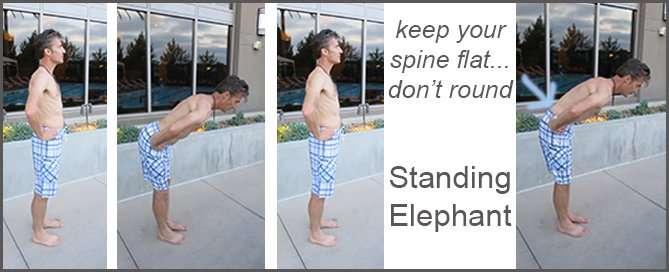Standing Elephant2