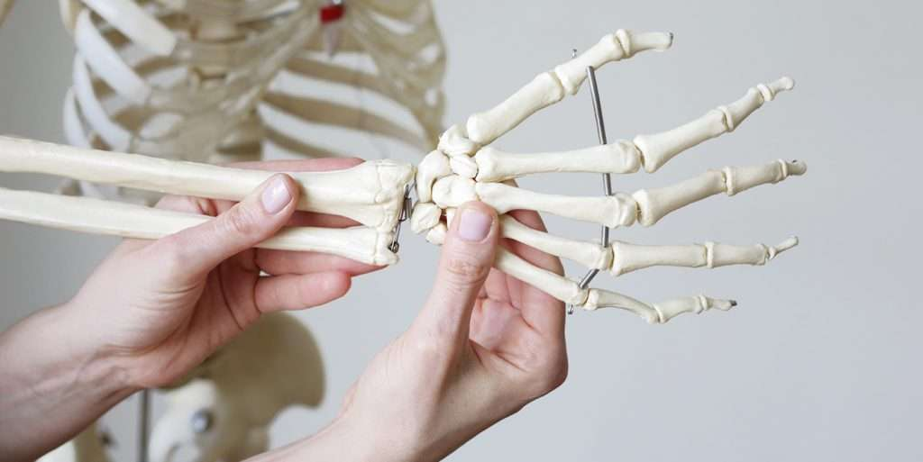 Carple bones of skeleton-st