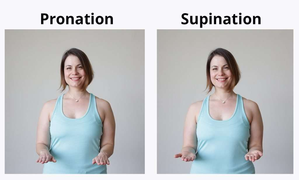 Pronation & supination of forearm